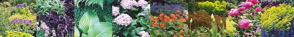 Bepflanzungsplanung, Gartenberatung, Bepflanzungsplanung online